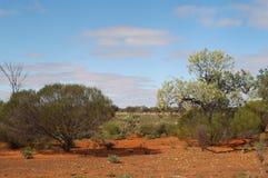 Le buisson australien image stock