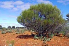 Le buisson australien image libre de droits