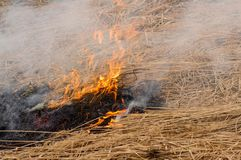 Le burning de l'herbe sèche Un été aride smog photo libre de droits