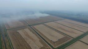 Le burning de la paille de riz dans les domaines Fumez du burning de la paille de riz en test Le feu sur le champ banque de vidéos