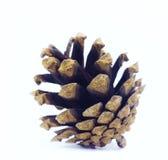 Le cône de pin Images libres de droits
