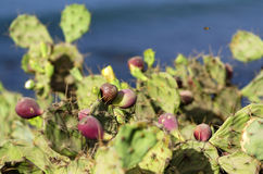 Le cactus Photographie stock libre de droits