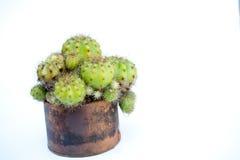 Le cactus dans un pot avec de l'eau et ajoutent une coupe à l'air la baisse sur un petit morceau Images libres de droits