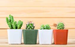 Le cactus de différence dans le pot Photographie stock