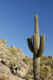 Le cactus de printemps fleurit 3 photographie stock