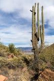 Le cactus de Saguaro, frottent des buissons et la vue de lac theodore Roosevelt, image stock