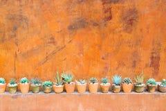 Le cactus des murs artificiels a garni du fond rouge Images stock
