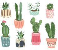 Le cactus plante des collections Images stock