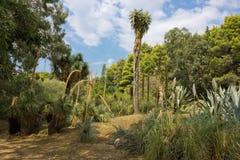 Le cactus plante l'horizontal Photos libres de droits