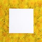 Le cadre blanc sur le jaune fleurit le fond Ressort, concept d'été Configuration plate, vue supérieure Image libre de droits