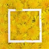 Le cadre blanc sur le jaune fleurit le fond Ressort, concept d'été Configuration plate, vue supérieure Photographie stock libre de droits
