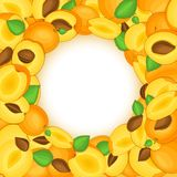 Le cadre coloré rond composé d'abricots délicieux portent des fruits Illustration de carte de vecteur Cadre d'abricots de trou de Photographie stock libre de droits