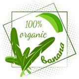 Le cadre décoratif des feuilles du palmier et des bananes, le texte est une banane organique illustration stock