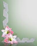 le cadre d'amaryllis fleurit le rose Photographie stock