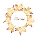 Le cadre de cercle d'automne avec l'érable part du dessin Photographie stock libre de droits