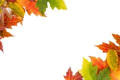 Le cadre de fond a isolé la noce colorée de feuilles d'automne i Images stock