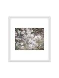 le cadre de photo d'isolement avec le chemin de coupure pour décorent, intérieur, Photos stock