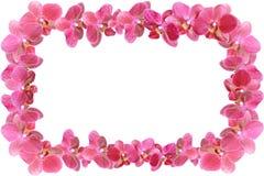 Le cadre de photo fait en orchidée fleurit avec des baisses de rosée d'isolement dans le fond Photographie stock