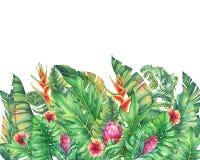 Le cadre des branches avec les fleurs, les ketmies et les plantes tropicales pourpres de Protea Photos libres de droits