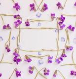 Le cadre des petits pétales et forêt bleus fleurit les violettes pourpres sur le fond blanc avec l'espace pour le texte Photo libre de droits