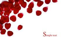 Le cadre effectué à partir du rouge a monté Photo stock