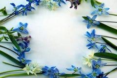 Le cadre est garni des fleurs bleu-foncé des primevères et des primevères bleu-clair sur un fond bleu photographie stock libre de droits