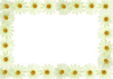 le cadre fleurit le blanc de trame Photographie stock libre de droits