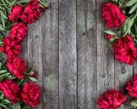 Le cadre floral avec les pivoines roses fleurit sur le backgrou en bois rustique Photo libre de droits