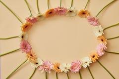 Le cadre ovale du gerbera fleurit sur un fond jaune avec l'espace de copie Photographie stock