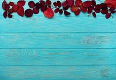 Le cadre plat de configuration du cramoisi d'automne part et des noix sur un en bois Images libres de droits