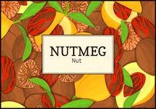 Le cadre rectangulaire sur le fond de noix de muscade Illustration de carte de vecteur Épice Nuts, fruit dans la coquille, entier Photos libres de droits