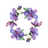 Le cadre rond avec le géranium de forêt d'aquarelle fleurit et endroit pour votre texte Perfectionnez pour des salutations, invit illustration stock