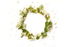 Le cadre rond de frontière avec le jasmin blanc fleurit, bourgeonne Photo libre de droits