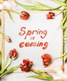 Le cadre rouge de tulipes avec le ressort des textes d'écriture vient sur le fond blanc de tableau Images libres de droits