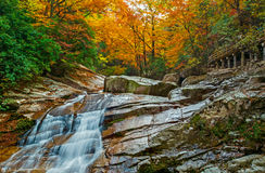 Le cadute della foresta di autunno Immagine Stock