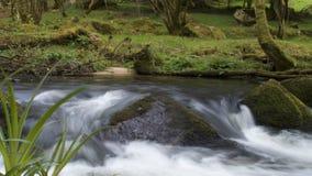 Le cadute di Golitha, Bodmin attraccano, Cornovaglia, Regno Unito Fotografia Stock Libera da Diritti