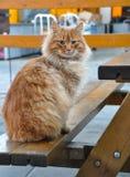 Le café de chat demande à manger image libre de droits