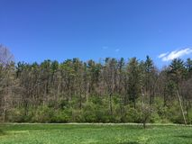 Le calme des bois et du ciel images stock