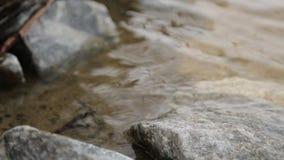 Le calme, lac clair, paysage minimalistic banque de vidéos