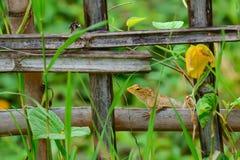 Le caméléon se tient dessus pour sécher des branches photo stock