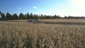 Le camion approche la machine de moissonneuse pour charger le maïs mûr banque de vidéos