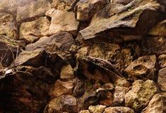 Le camouflage parfait Image stock