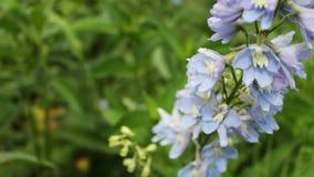 Le campane adorabili e delicate dei fiori si sviluppano nel parco dell'estate stock footage