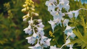 Le campane adorabili e delicate dei fiori si sviluppano nel parco dell'estate archivi video