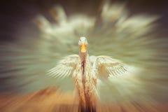 Le canard de danse Images libres de droits