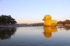 Le canard de rhubarbe de palais d'été Images libres de droits
