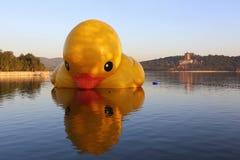 Le canard de rhubarbe de palais d'été Photos libres de droits