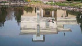 Le canard sauvage nage dans le lac automnal banque de vidéos