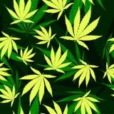 Le cannabis pousse des feuilles modèle sans couture de vecteur illustration de vecteur