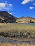 Le canne alte invase lago Fotografia Stock